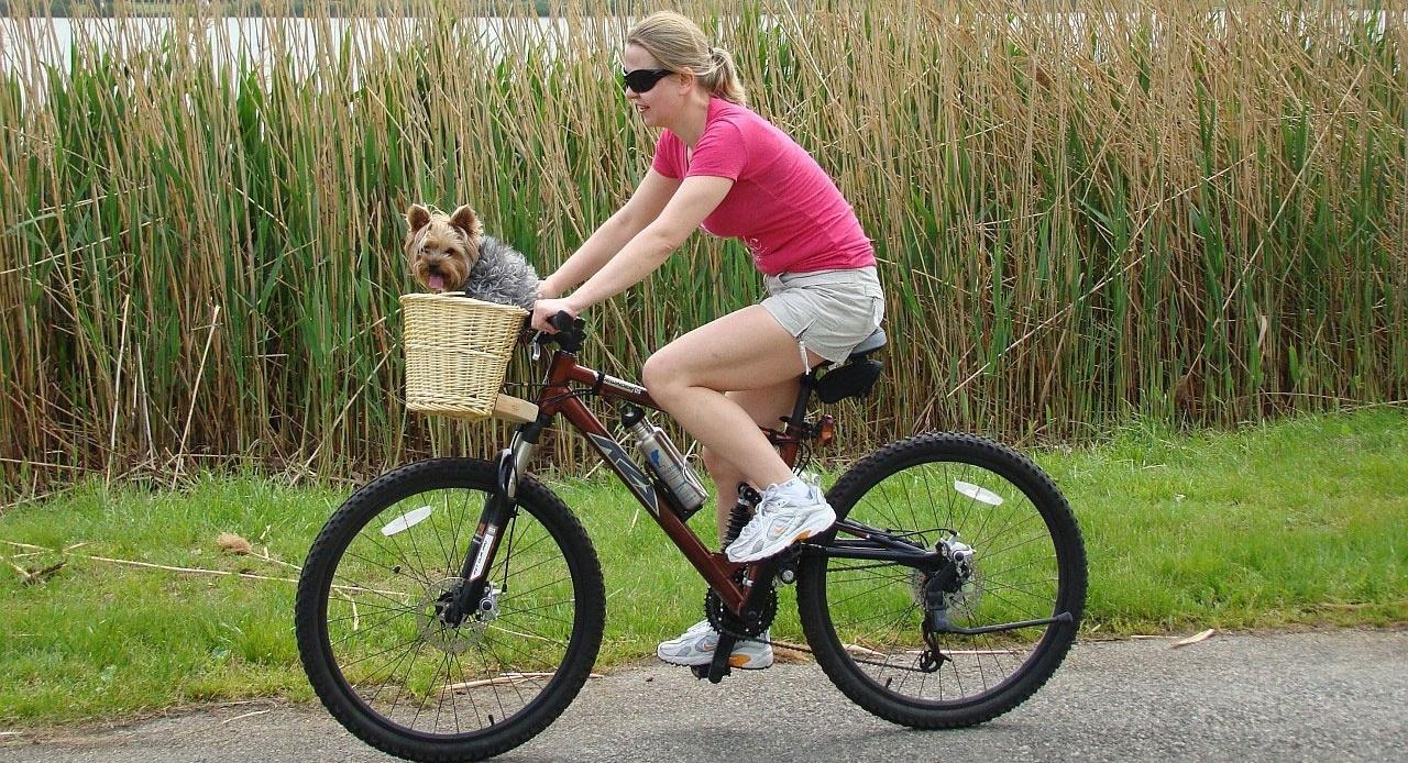 Faire du vélo, c'est bon pour la santé